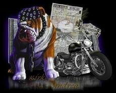 dog and motorcycle