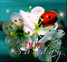 Enjoy Sunday