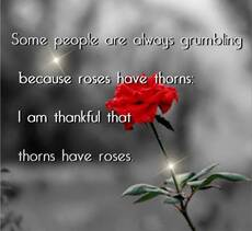 some people are always grumbling because roses have thorns