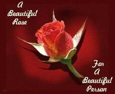 A beautiful rose for a beautiful person
